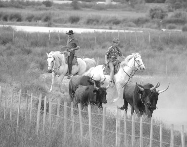 Des chevaux en Camargue