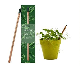 Un crayon à planter égale une plante